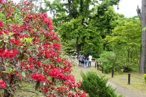 植物園再開 芍薬など花・花・花_e0048413_18090397.jpg