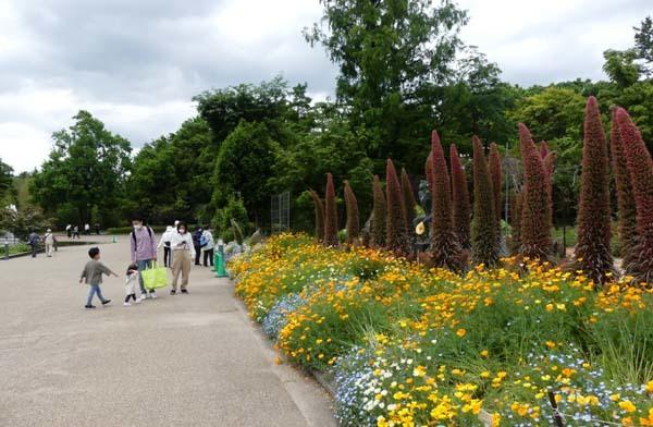 植物園再開 芍薬など花・花・花_e0048413_18092823.jpg