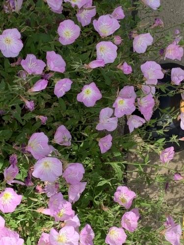 幼稚園のお庭 3_c0107515_09002412.jpeg