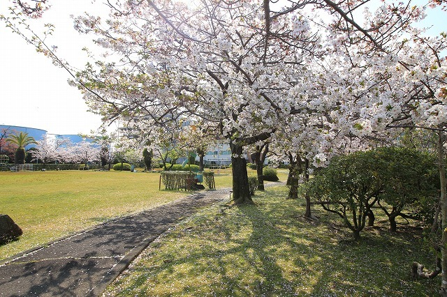 桜咲く尾鷲三田工事所 庭園散歩(その1)(撮影:4月10日)_e0321325_15195594.jpg