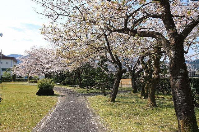 桜咲く尾鷲三田工事所 庭園散歩(その1)(撮影:4月10日)_e0321325_15200983.jpg