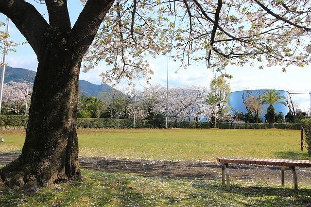 桜咲く尾鷲三田工事所 庭園散歩(その1)(撮影:4月10日)_e0321325_15203889.jpg