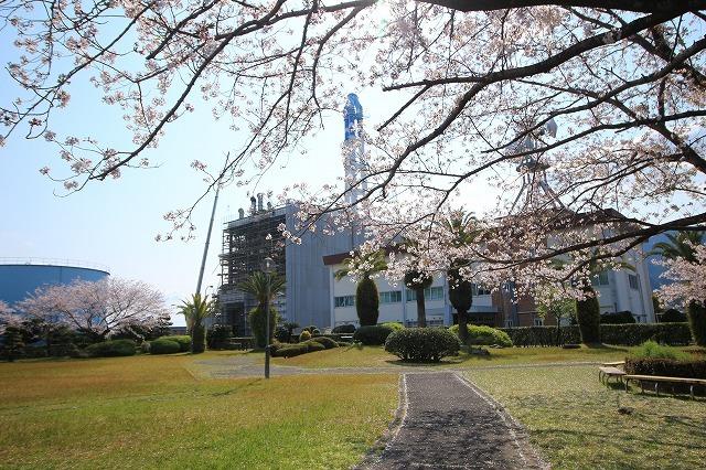 桜咲く尾鷲三田工事所 庭園散歩(その1)(撮影:4月10日)_e0321325_15211755.jpg
