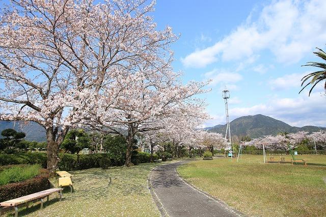桜咲く尾鷲三田工事所 庭園散歩(その1)(撮影:4月10日)_e0321325_15234805.jpg