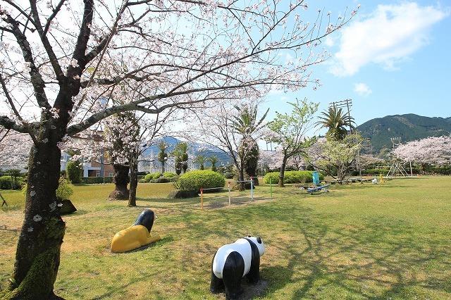 桜咲く尾鷲三田工事所 庭園散歩(その2)(撮影:4月10日)_e0321325_16513814.jpg