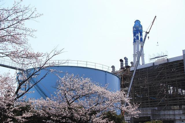 桜咲く尾鷲三田工事所 庭園散歩(その2)(撮影:4月10日)_e0321325_16573358.jpg