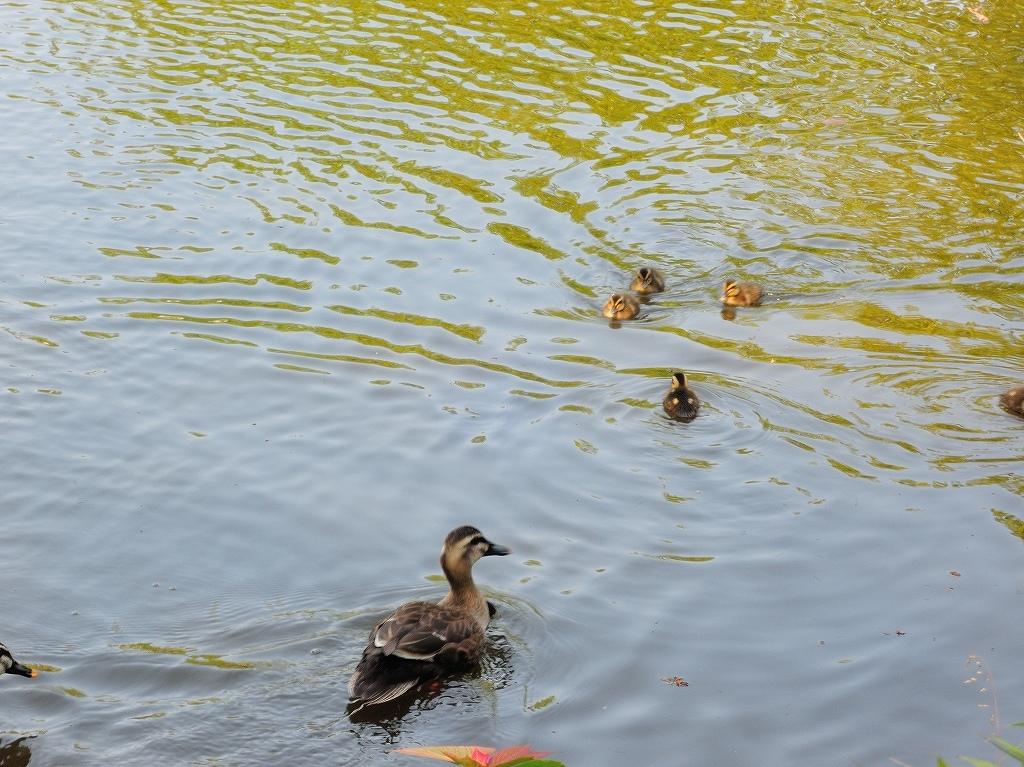 ある風景:Kikuna pond, Yokohama@May_c0395834_22345477.jpg