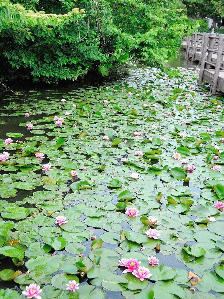 ある風景:Kikuna pond, Yokohama@May_c0395834_22345503.jpg
