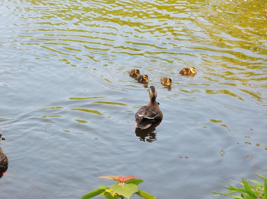 ある風景:Kikuna pond, Yokohama@May_c0395834_22345525.jpg