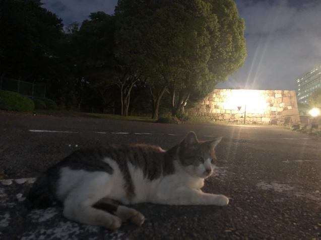 夜の名古屋城へ〜_e0379544_10184946.jpeg