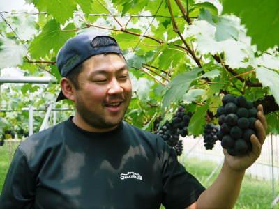 熊本ぶどう 社方園 今年(2020年)は例年以上の大粒に仕上げるべく摘粒作業が行われています(後編)_a0254656_18230567.jpg