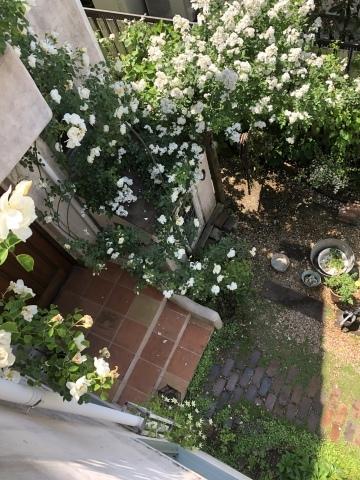 庭に癒されて^_^_c0185459_15213600.jpeg