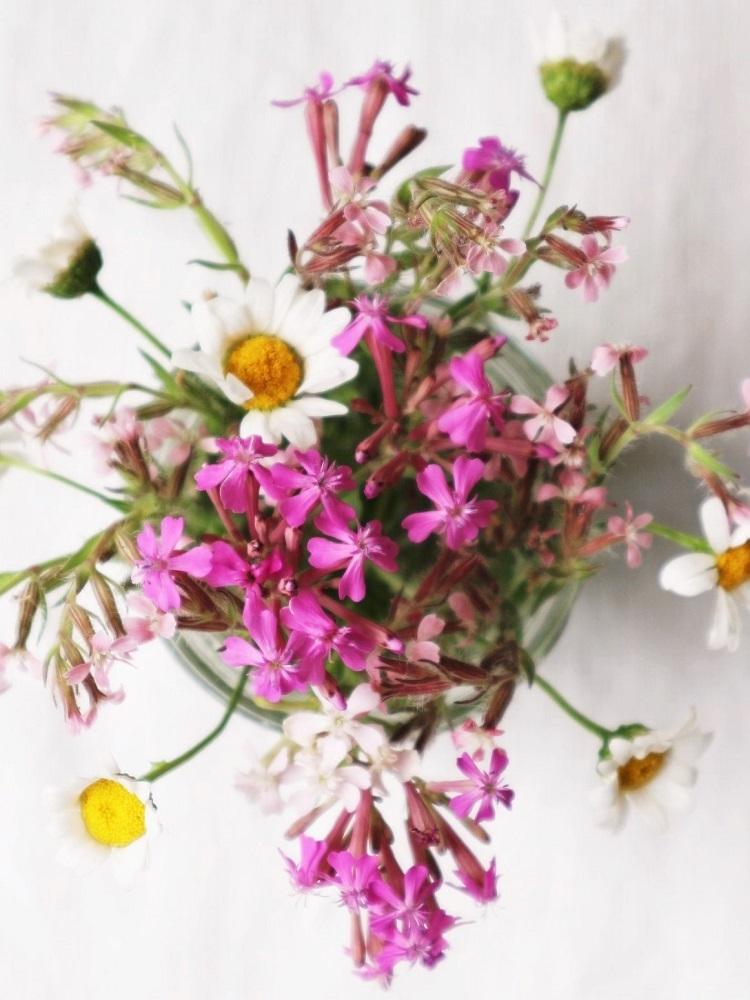 野の花あそび_d0159066_15264638.jpg