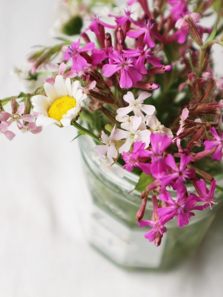 野の花あそび_d0159066_15265187.jpg