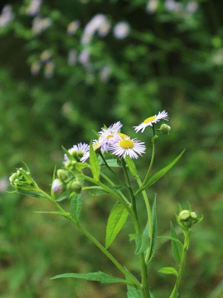 野の花あそび_d0159066_15265660.jpg