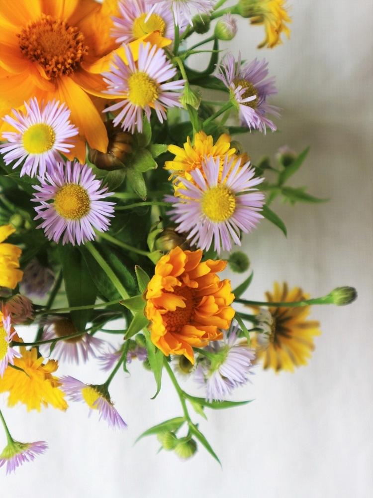 野の花あそび_d0159066_15265973.jpg