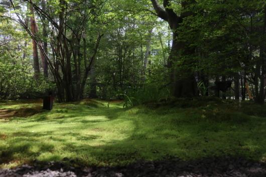 お店の庭にモリーユ茸_b0246670_13150940.jpeg