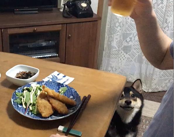 犬と食卓_b0011075_14045946.jpg