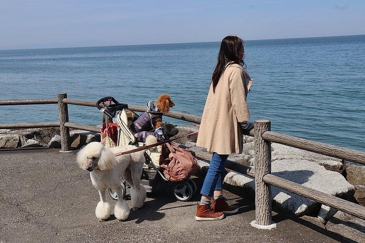砂利の海岸で♪【誕生日旅行3】_b0111376_15295371.jpg
