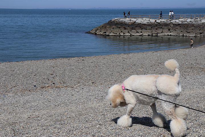 砂利の海岸で♪【誕生日旅行3】_b0111376_15353970.jpg