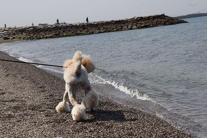 砂利の海岸で♪【誕生日旅行3】_b0111376_15373318.jpg