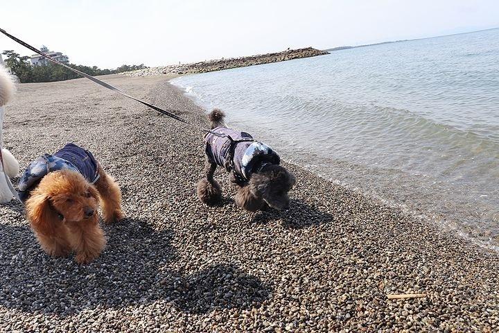 砂利の海岸で♪【誕生日旅行3】_b0111376_15453878.jpg