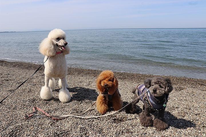 砂利の海岸で♪【誕生日旅行3】_b0111376_15470531.jpg