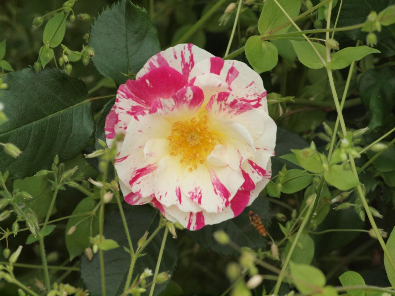 『薔薇の思い出・・・♪』_d0054276_20245853.jpg