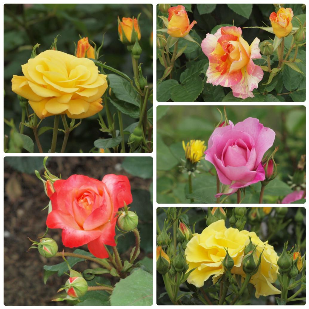 『薔薇の思い出・・・♪』_d0054276_2028529.jpg