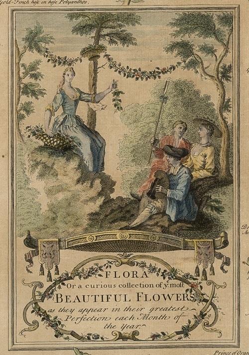 18世紀:花図鑑のような印刷物_c0084183_11044257.jpg