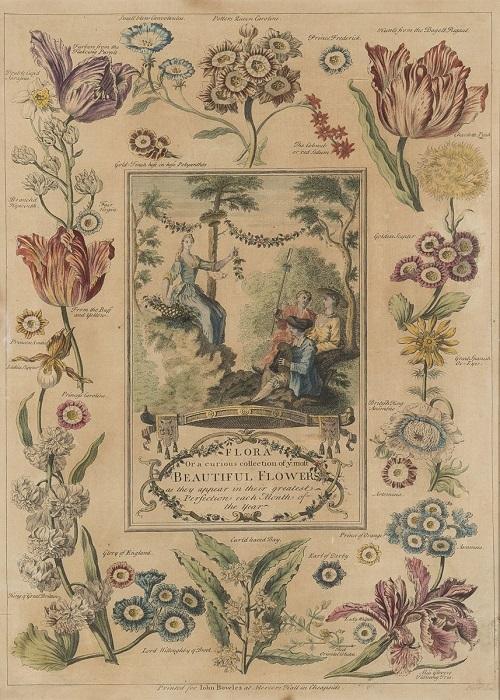 18世紀:花図鑑のような印刷物_c0084183_11044588.jpg