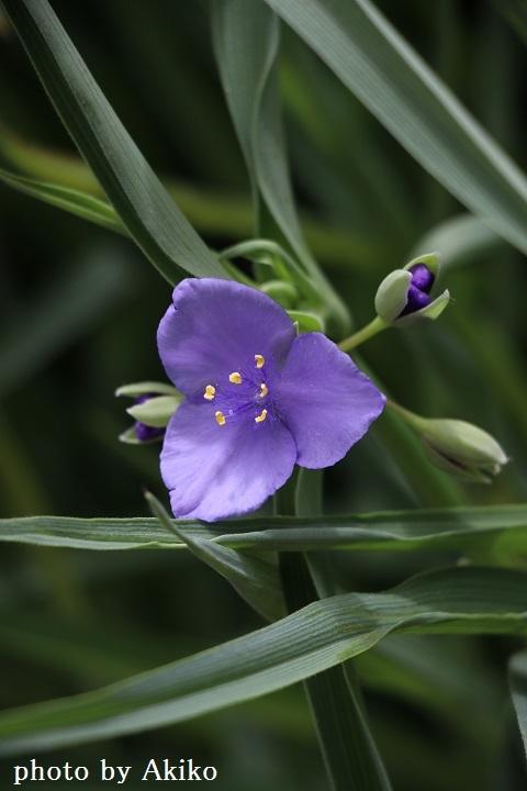 季節の花たちに癒される♡_f0298290_14522835.jpg