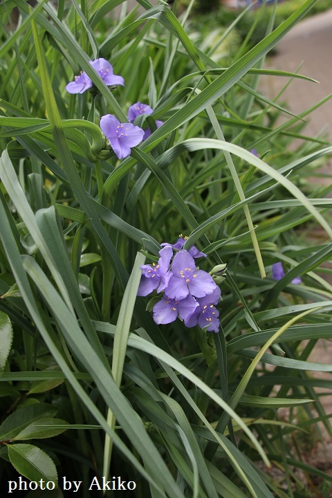 季節の花たちに癒される♡_f0298290_14524418.jpg