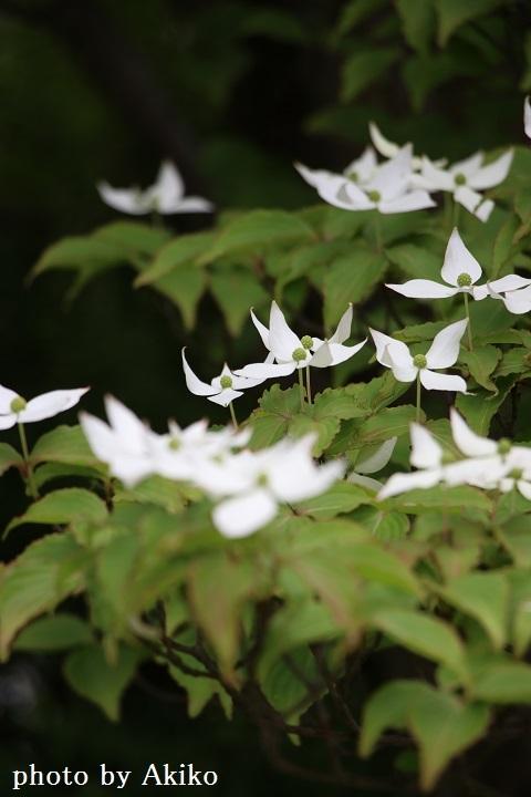 季節の花たちに癒される♡_f0298290_14532010.jpg