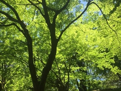 新緑の香り♪_e0281793_10481651.jpg