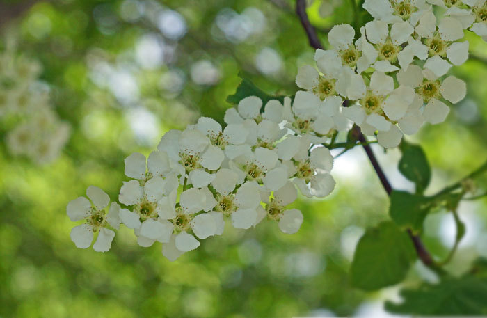 白い花いろいろ_d0162994_08375953.jpg