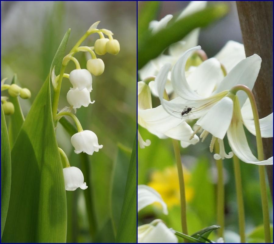 白い花いろいろ_d0162994_08380788.jpg