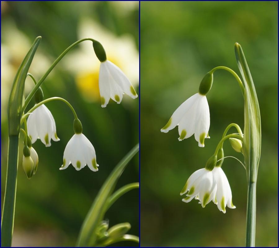 白い花いろいろ_d0162994_08381850.jpg