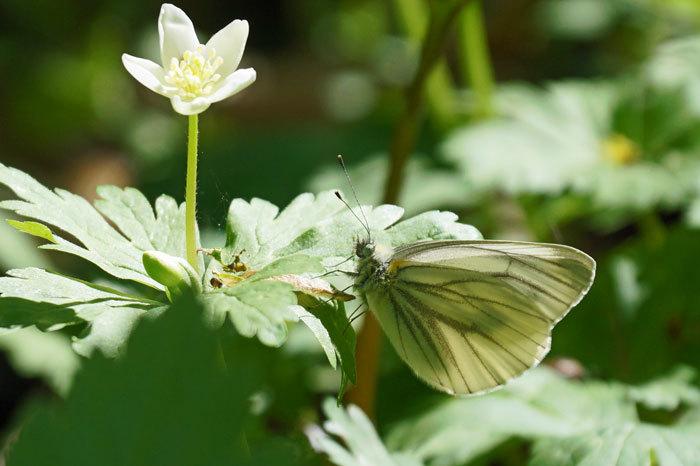 白い花いろいろ_d0162994_08383840.jpg