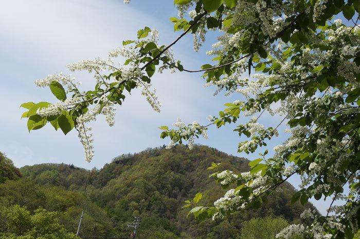 白い花いろいろ_d0162994_08390274.jpg