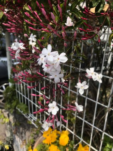 巣籠もりの春_f0101201_16494710.jpg