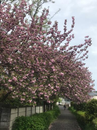 巣籠もりの春_f0101201_16495150.jpg