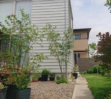 中庭・緑豊かなアプローチの様子_b0183404_13065757.jpg