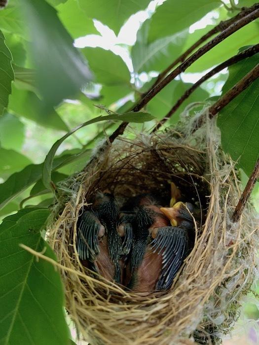 鳥の巣立ち_d0116910_11365523.jpg