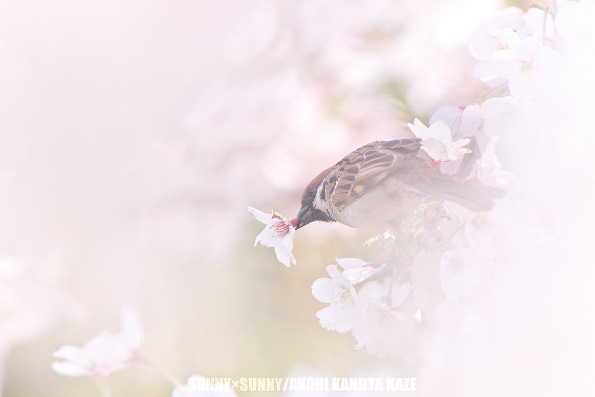 君に会えなかった春_a0204724_11290047.jpg