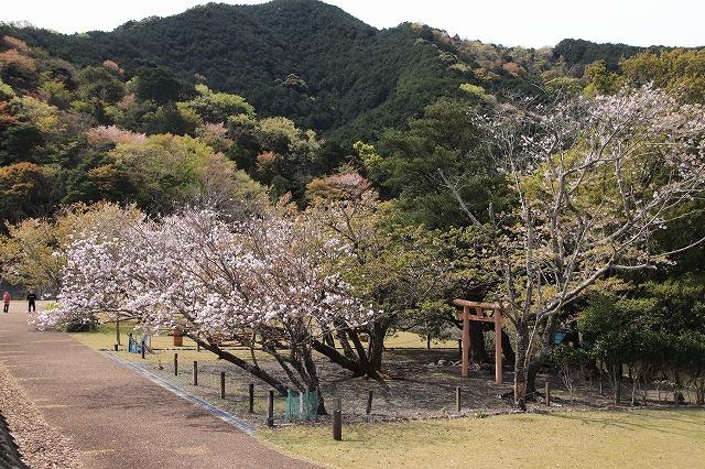 大白公園一周散歩(その1)(撮影:4月11日)_e0321325_19264800.jpg