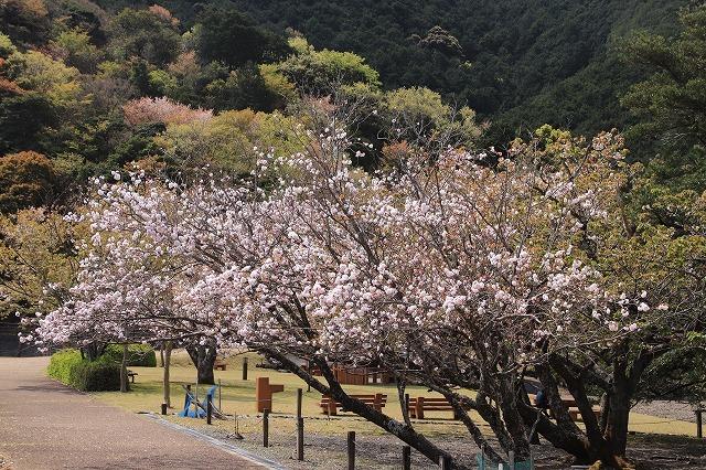 大白公園一周散歩(その1)(撮影:4月11日)_e0321325_19270403.jpg