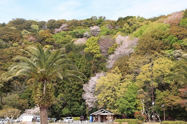 大白公園一周散歩(その1)(撮影:4月11日)_e0321325_19271964.jpg