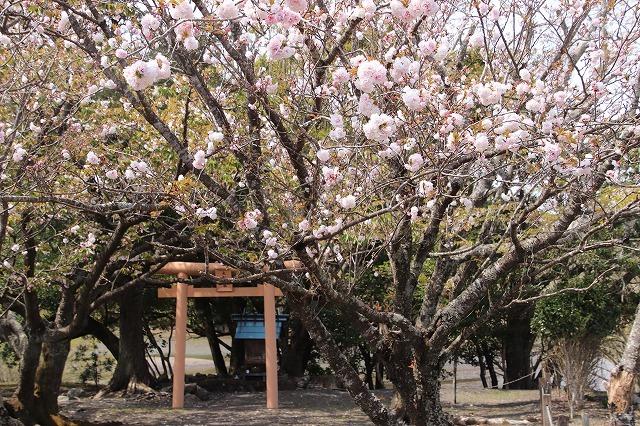 大白公園一周散歩(その1)(撮影:4月11日)_e0321325_19275552.jpg