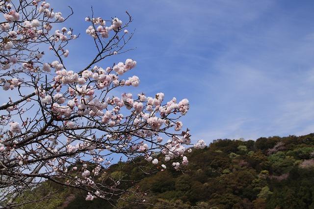 大白公園一周散歩(その1)(撮影:4月11日)_e0321325_19282882.jpg